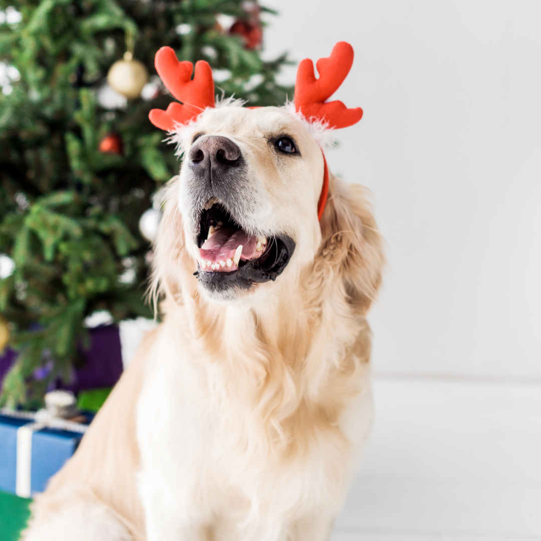 Christmas Presents for Dogs