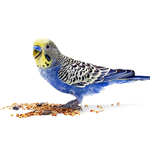 Indoor Bird Food
