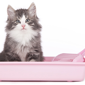 Cat Litter & Trays