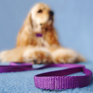 Dog Leads, Collars & Harnesses