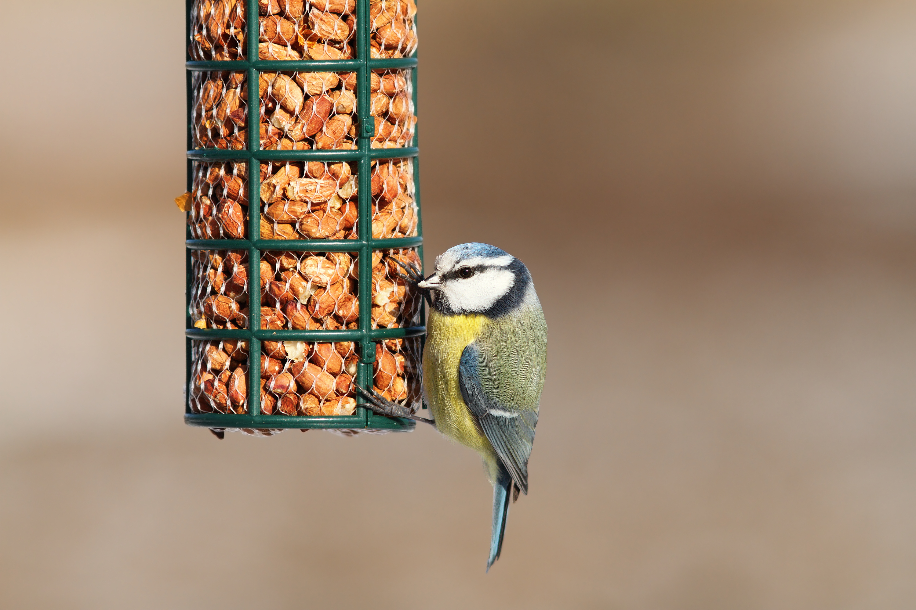 Wild Bird Feeders & Nest Boxes