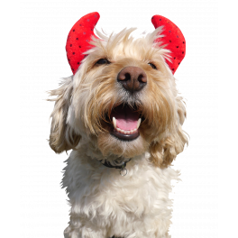 Rosewood Halloween Novelty Devil Horns for Dogs