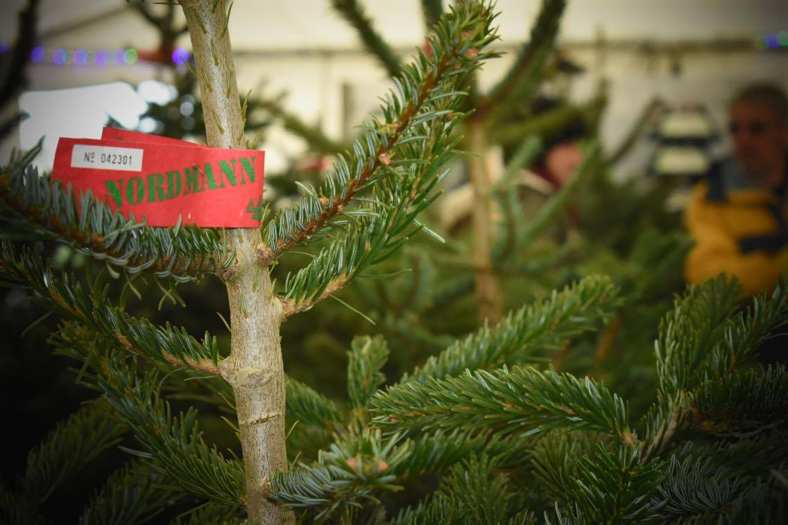 Top tips for looking after a real christmas tree foss feeds for Best looking christmas tree