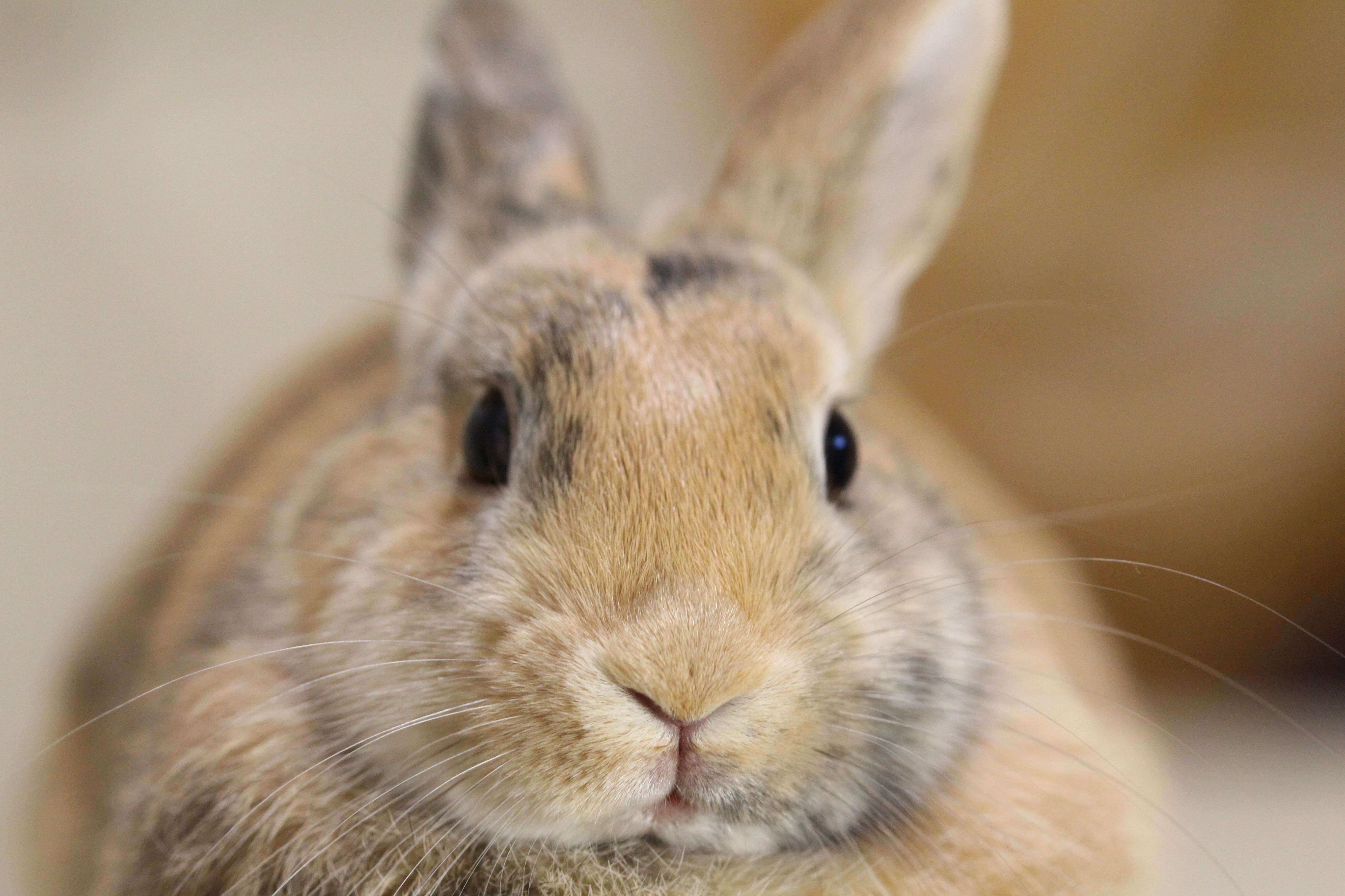 How to Care for Your Pet Rabbit