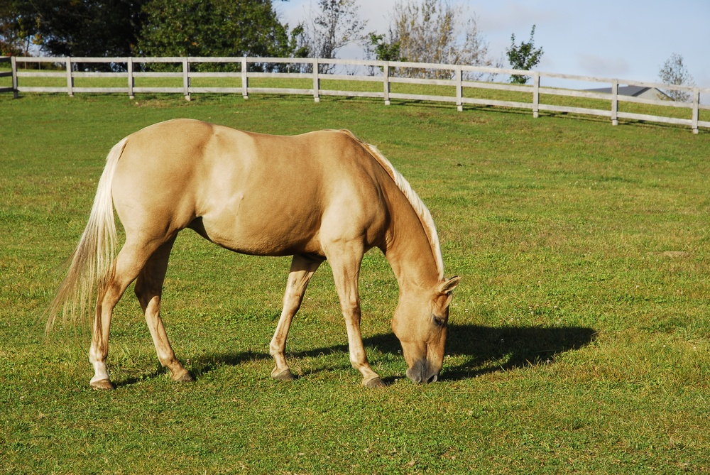 The 5 Poisonous Plants that Horses Should Avoid