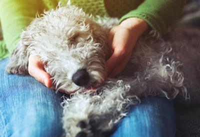 5 Ways to Keep Your Dog Calm on Bonfire Night