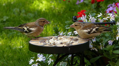 How to Care for the Birds in Your Garden