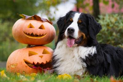 How to Ensure Your Pets are Safe at Halloween