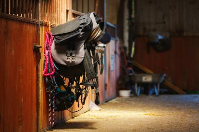 Basic Equipment Every First-Time Horse Owner Needs
