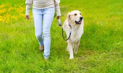 Dog Walking Tips to Get Those Tails Wagging