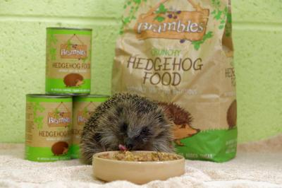 The European Hedgehog - Guest Post