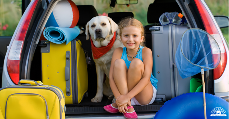 The ultimate travel tips for you and your dog!