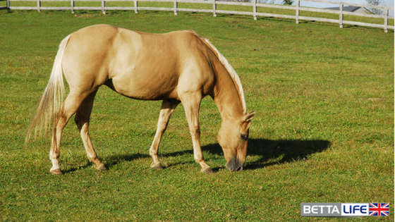 Joint and Digestion Support For Your Horse from BettaLife - Guest Post