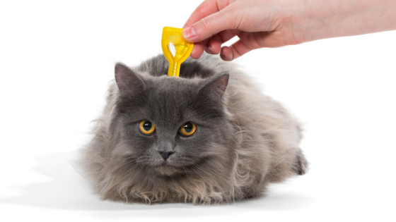 Keep Your Pets Free From Fleas This Summer with our Guide to Fleas!